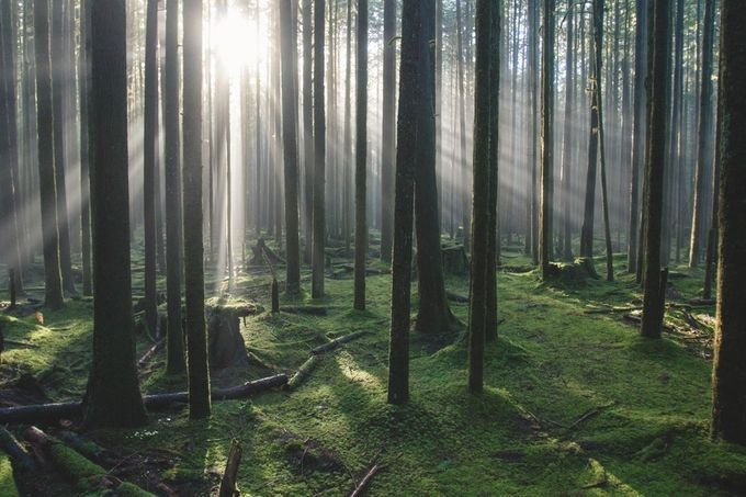 Rays by zmelhus - Understanding Light Photo Contest