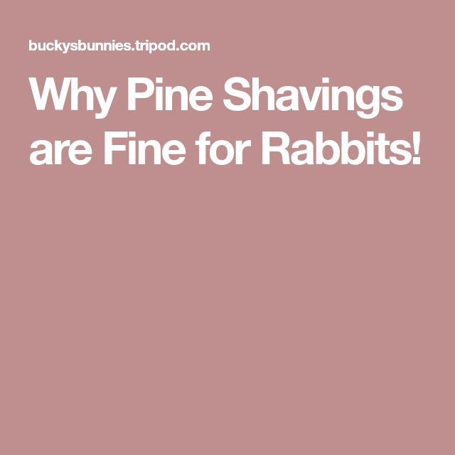 Why Pine Shavings are Fine for Rabbits!