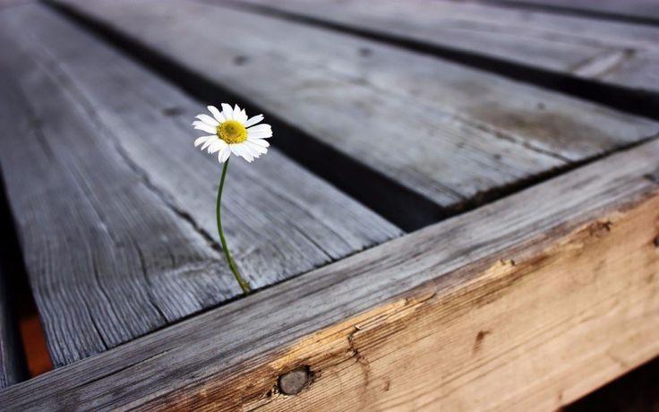 Неудача — это просто возможность начать снова, но уже более мудро.    Генри Форд    #Елена_Иссенгел #Путь_к_себе #осознанность #мудрыемысли #трансформация #поиск_истины