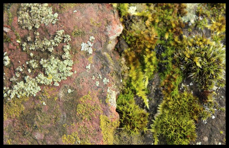 'Little Landscape' by Kim Lee Kho, 2016 © #moss #lichen #green #closeup #nature
