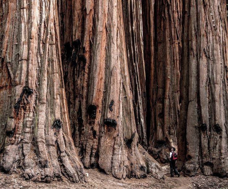Mammutbaum: Gefragt nach den beliebtesten Reisezielen in den USA nennen...