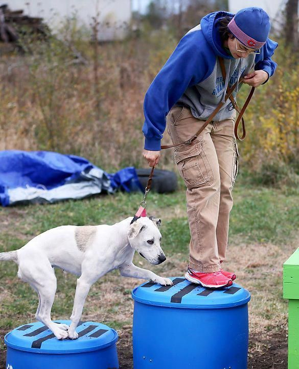 Blessed Carried Out Dog Training For Agility Like This Humane