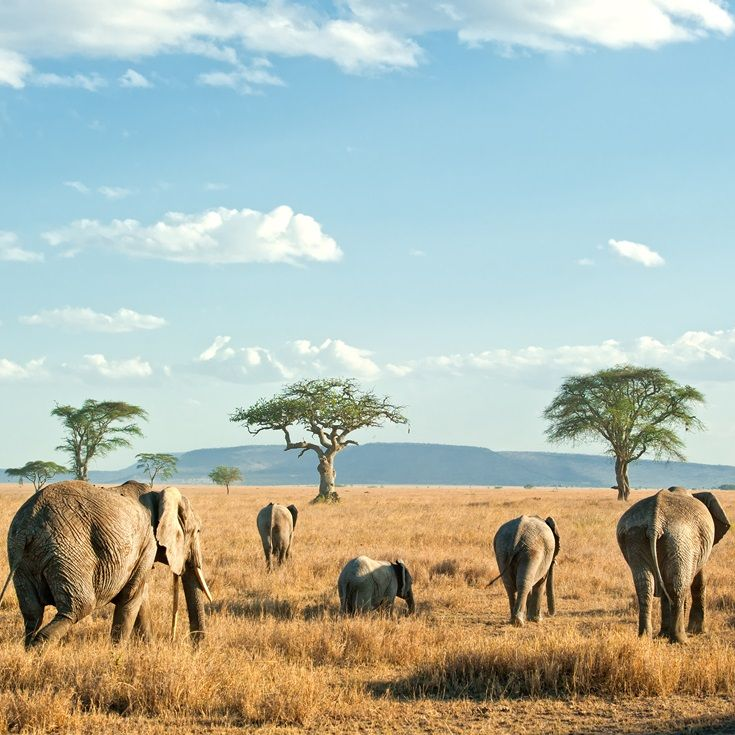 The Serengeti - home to vast landscapes and prolific game
