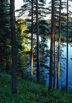 Punkaharju Esker Ridge, one of the world's oldest nature reserves in Finland.
