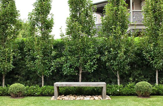 Podocarpus falcatus hedge. Pyrus ussuriensis with low Gardenia 'Florida' hedge. Custom Australian hardwood bench with nepean random pebbles, framed by Buxus balls. Randwick, NSW Australia. Anthony Wyer + Associates www.anthonywyer.com