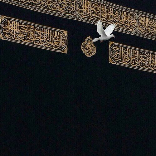 Dove near the Kaaba ❤️