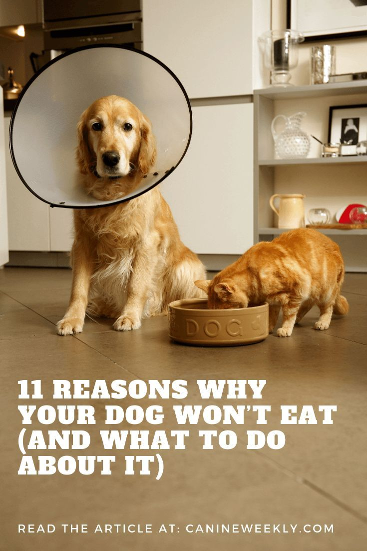 11 Reasons Why Your Dog Won T Eat And What To Do About It Your Dog Top Dog Breeds Dog House Air Conditioner