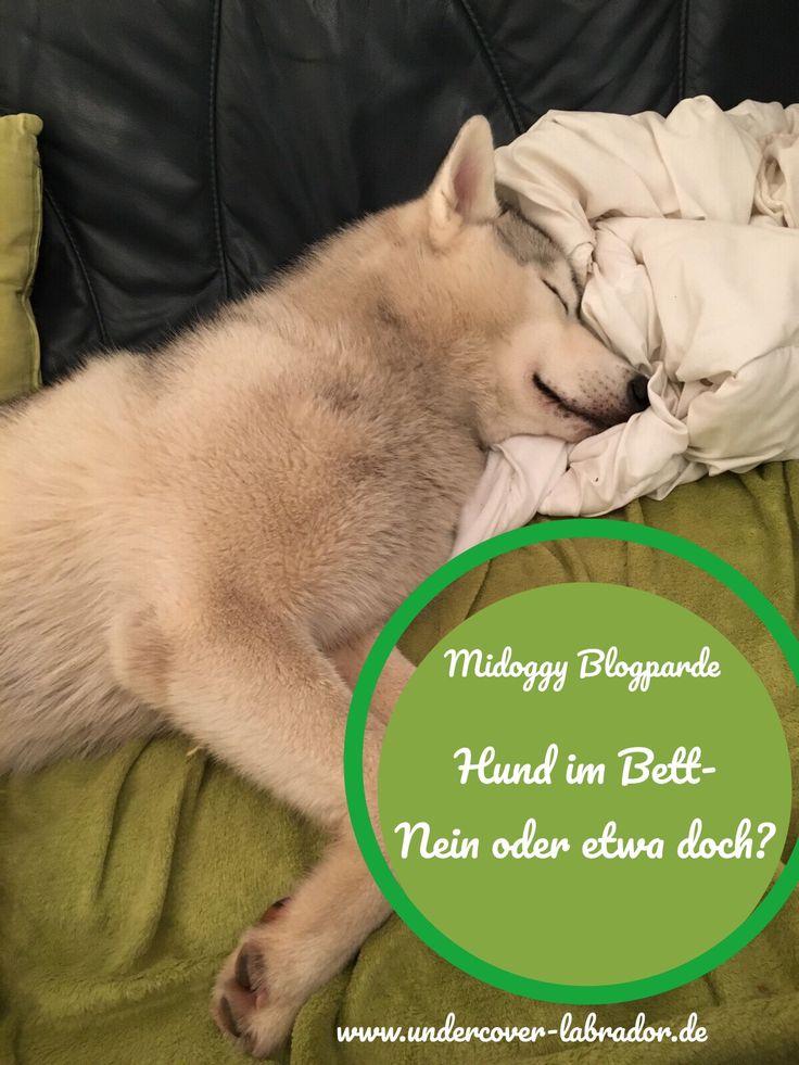Die Besten 17 Ideen Zu Hundebetten Auf Pinterest Haustierbetten Hund Und Welpen Betten