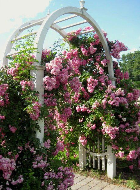 love roses over an arbor .... someday my garden will have one too.