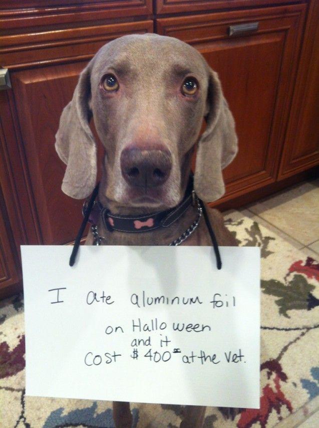 dog shaming reminds me of Gracie