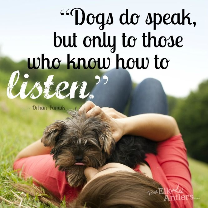 My Dog Loves Me Quotes: 299 Best Images About Dog-spirational Quotes & Info For