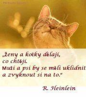 Ženy a kočky dělají, co chtějí. Muži a psi by se měli uklidnit a zvyknout si na to.