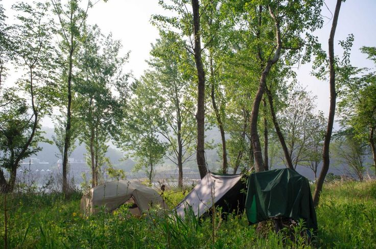 Wild Camping Along the Han River Forest