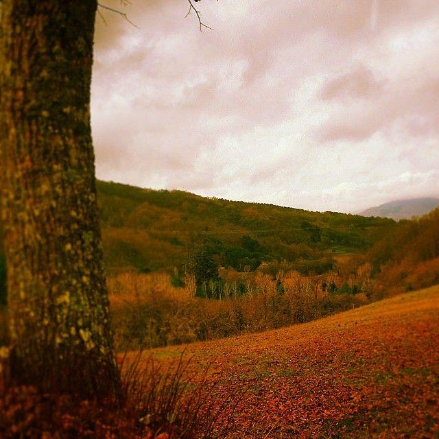 Real autumnal colours. E.M.