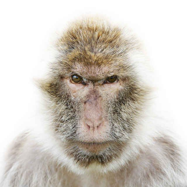 Best Animals Images On Pinterest Animal Portraits Animals - The most striking animal portraits youll ever see by morten koldby