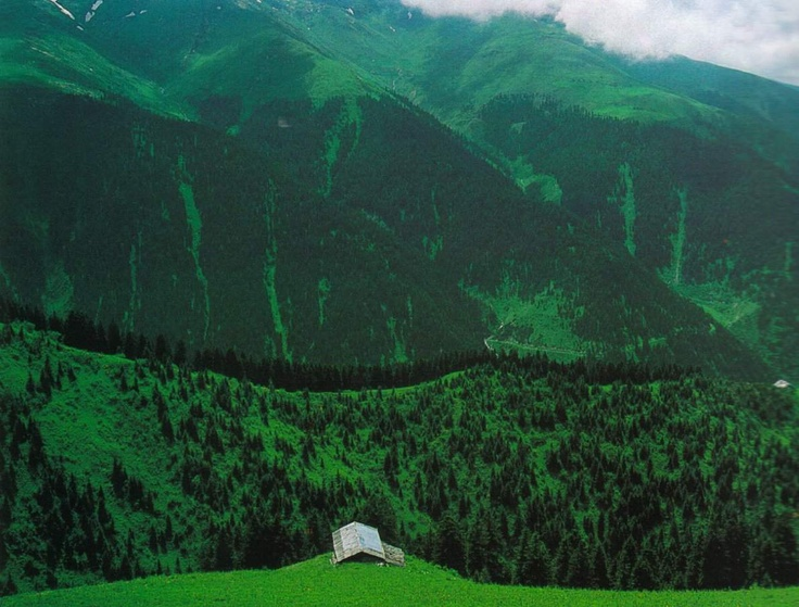 Rize, Black Sea region, Turkey #green