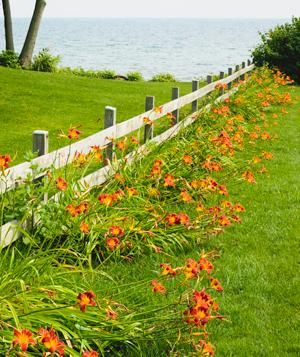 A simple way to choose plants (issues of sun and soil aside) is by color. Even the most basic approach yields gorgeous results, as seen here. Lilies Lilies run wild along a fence.