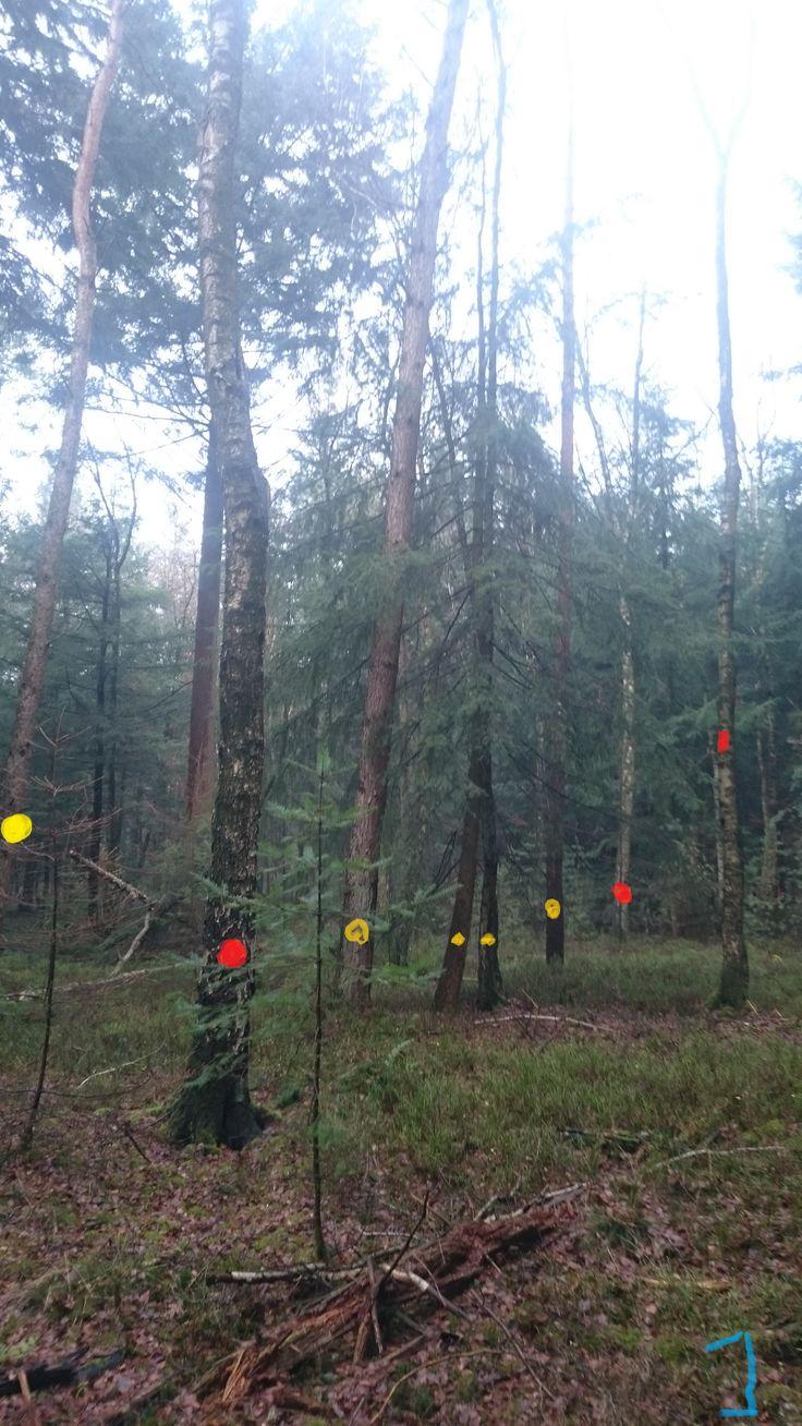 Vegetatie: berk, grove den, bosbes, douglas spar. Gele punt: vellen en afvoeren; deze bomen om op deze plek een open ruimte te creëren. Rode punt: Ringen; om staand dood hout te creëren, wat meer natuurwaarde heeft als liggende doodhout. We kiezen ervoor om de berken bomen te ringen in plaats van de dennen of sparren, omdat het loofhout is heeft dit meer natuurwaarde dan naaldhout.