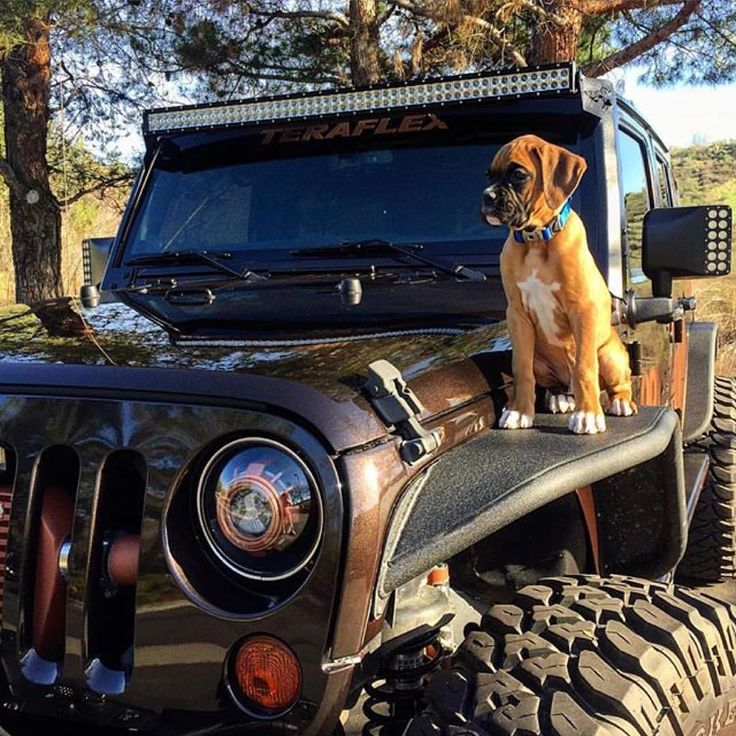 ripp superchargers on instagram jeep puppy love via badpennyjk rippsupercharged badpenny. Black Bedroom Furniture Sets. Home Design Ideas