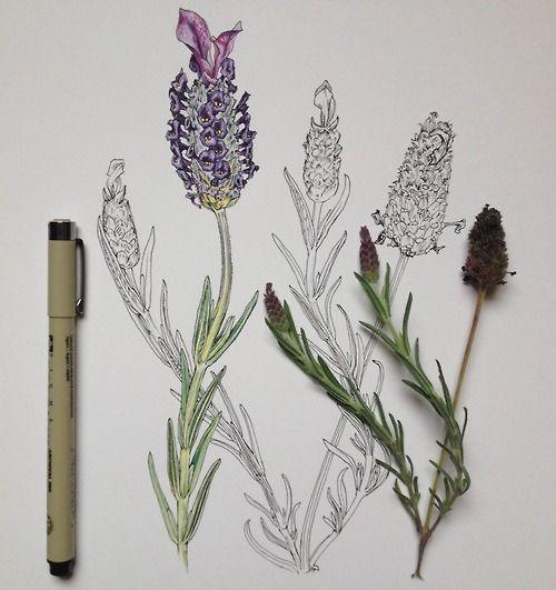 lavender additions by Noel Badges Pugh