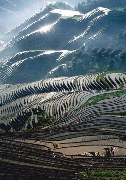 Guilin Longji Terraced Fields in Longshed China