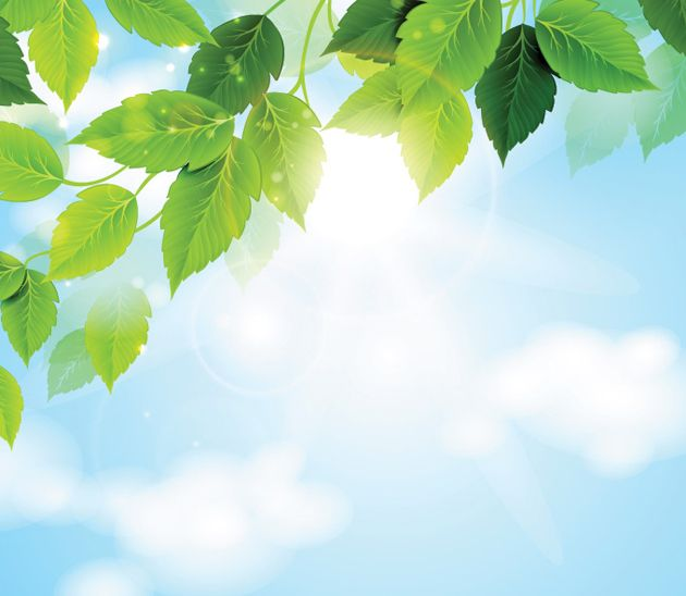 Sunny Sky with Green Leaves Background Vector
