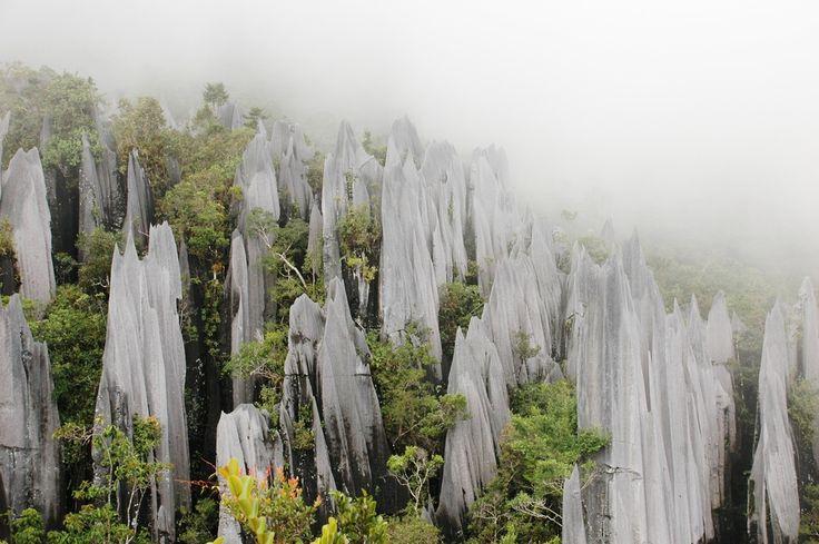 the pinnacles of Gunung Mulu National Park, Isle Borneo, state of Sarawak, Malaysia