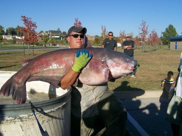 "109 best images about I love to ""Fish"" on Pinterest