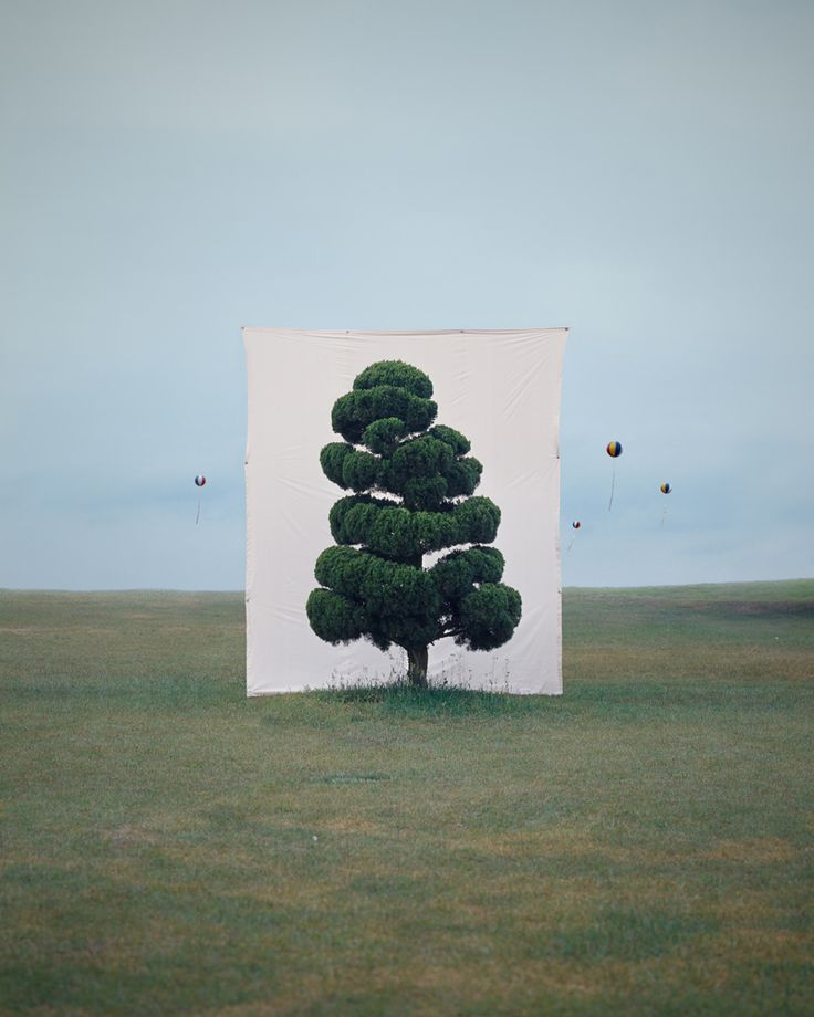 this isn't happiness™ (Against the backdrop, Myoung Ho Lee), Peteski