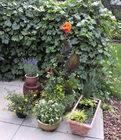 Interested in a container garden? Colorado State University Extension offers tips on containers, soil, plants, and care.