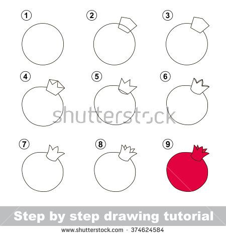Drawing tutorial. How to draw a Pomegranate - stock vector