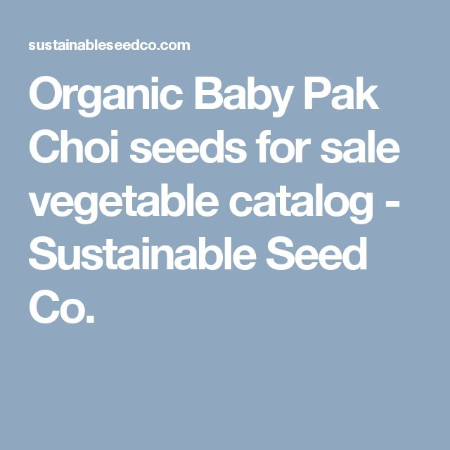 Organic Baby Pak Choi seeds for sale vegetable catalog - Sustainable Seed Co.