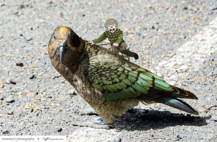 Dayanite Blog - Kea Rider Photography by Nevenka Krstic