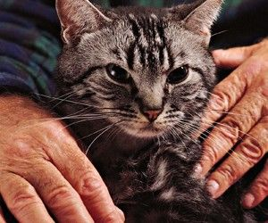 Домашние целители: кошки избавят от множества болезней http://ukrainianwall.com/health/domashnie-celiteli-koshki-izbavyat-ot-mnozhestva-boleznej/  Самыми распространенными домашними «целителями» считаются кошки. Если хозяину удается установить с ними доверительные отношения, то кошки способны находить и лечить больные места своего хозяина. Они ложатся на это место, мурлыкают,