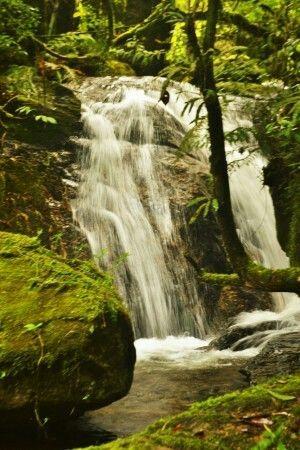 Trilha caminho das cachoeiras  Mantiqueira