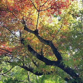 Four Seasons: Autumn in the Blue Mountains