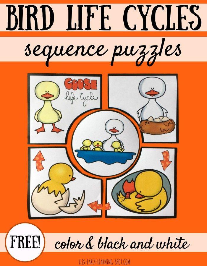 Bird Life Cycle on Kindergarten Worksheets Snowy Owl