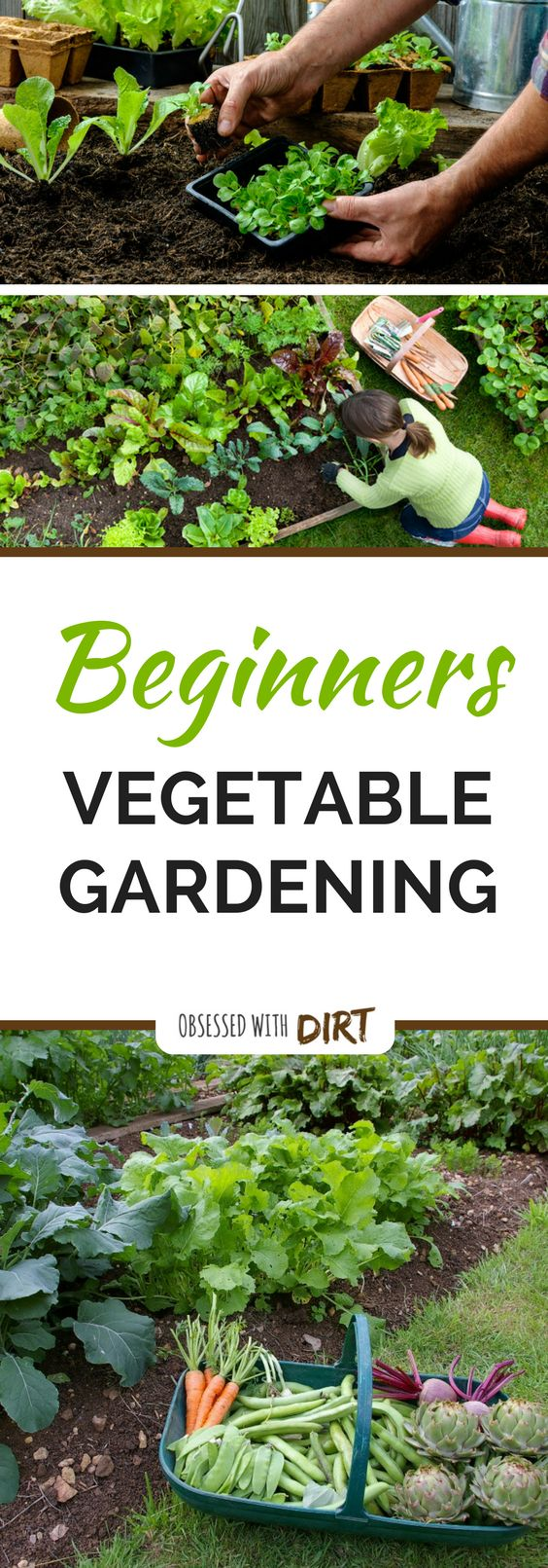 I love this beginner vegetable gardening guide. Absolutely everything is covered from choosing the best location to planting your first crop.