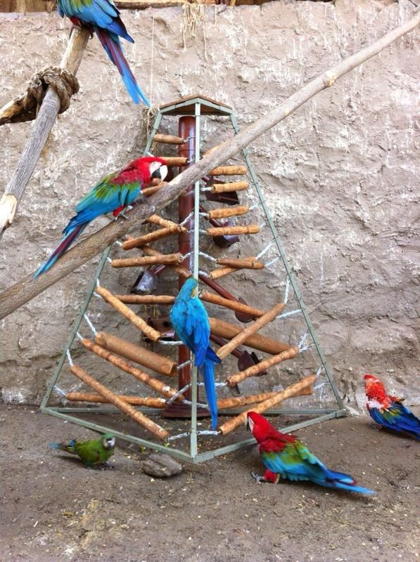 Bird Enrichment Toys : Best images about animal enrichment on pinterest