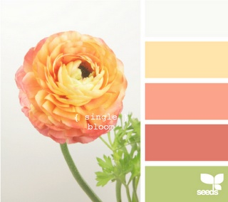 """#DesignSeeds - Single bloom. Great colors for the family room (basement). So cheerful! The walls are slightly paler than that yellow (Glidden's """"Gold Coast White""""). The trim and built-ins are ultra white. We still haven't picked out any decor elements or a color scheme yet."""