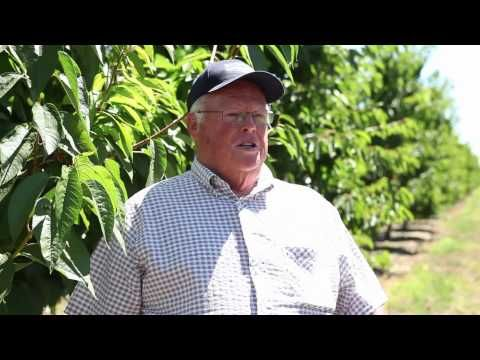 A fourth-generation California cherry grower, Dean understands the value of family farming in the Golden State. In fact, his son and daughter are both active in his business, which he has run for the past 36 years. But Dean's family business impacts more than just his immediate household -- he employs five full-time and 150 seasonal workers, all doing their part to produce superior cherries and satisfied customers.