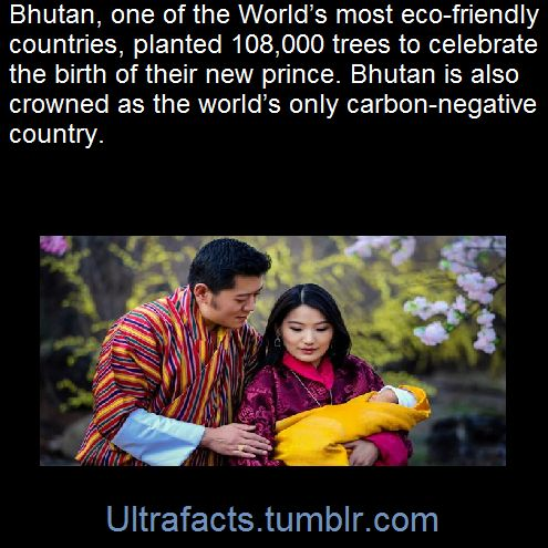 Last year, 100 Bhutanese volunteers set a Guinness World Record by planting 49,672 trees in just an hour.  SourceFollow Ultrafacts for more facts!