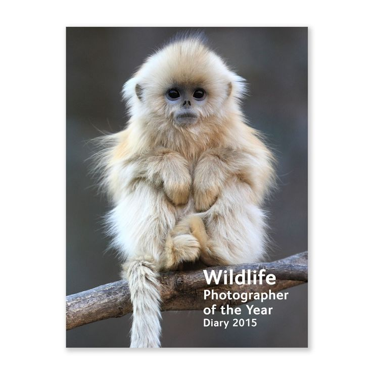 Pocket diary 2015 - Wildlife Photographer of the Year   2015 diaries and calendars   Natural History Museum Online Shop