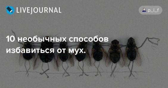 10 способов избавиться от мух