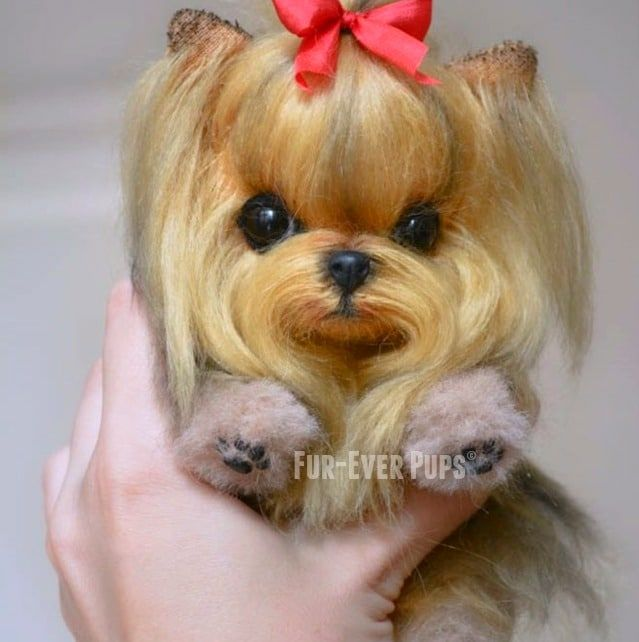 Small Breed Dogs For Sale In Illinois