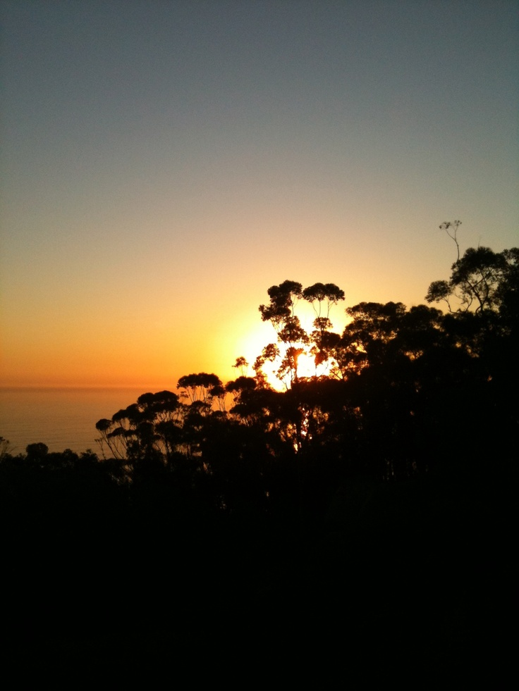 Sunset silhouetted by trees; over Atlantic Seaboard, Cape Town