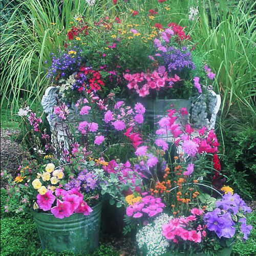 Galvanized buckets filled with a riot of colors!