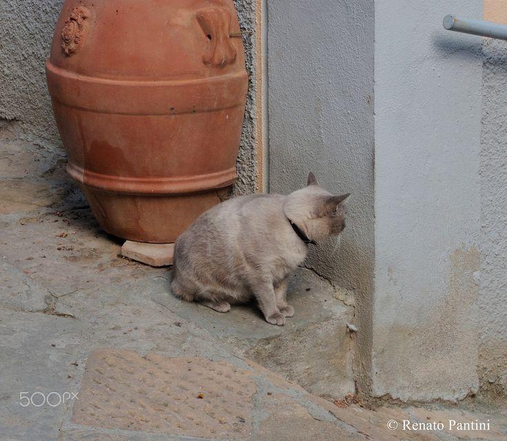 """No photo, please!"" - (March 2017)"