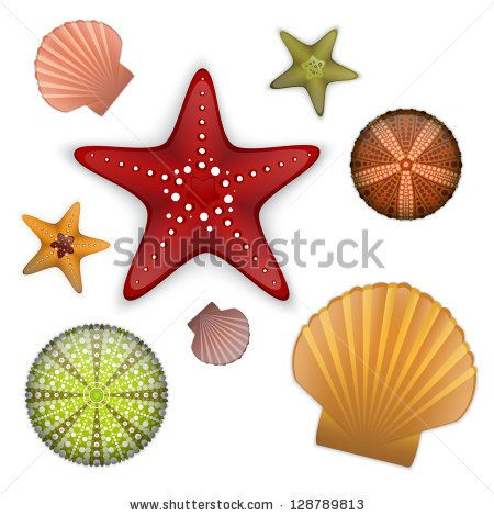 Sea life set, starfishes, scallop shell, sea urchin. - stock vector