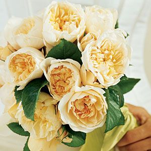 tea rose bouquet | 'Graham Thomas', a David Austin English Rose with cupped, butter yellow blooms